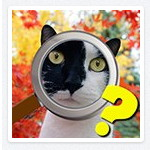Найди кота на Одноклассниках