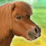 Мой дорогой пони