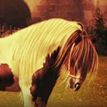 Отличаем лошадей