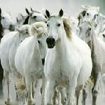 Пазл с лошадьми 3