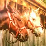Загадки старого ранчо