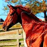 Пазл с лошадьми 2
