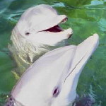 Пазлы с дельфинами
