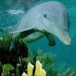 Пазл с дельфином