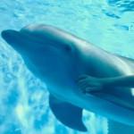 Поиск цифр История дельфина 2