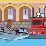 Новые приключения сиднейской акулы