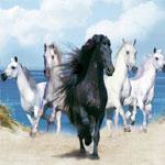 Пазл про лошадей