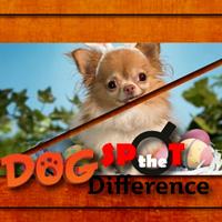 Найти отличия с собаками